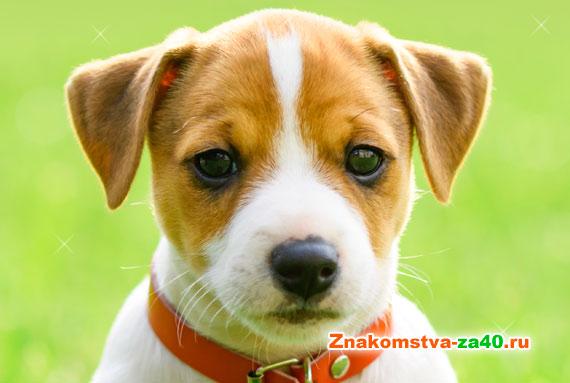 Совместимость знака Собака по году рождения с другими символами годов восточного гороскопа для поиска любви или заключения брака